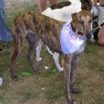 Midwest Greyhound Rescue Group at Our Store!
