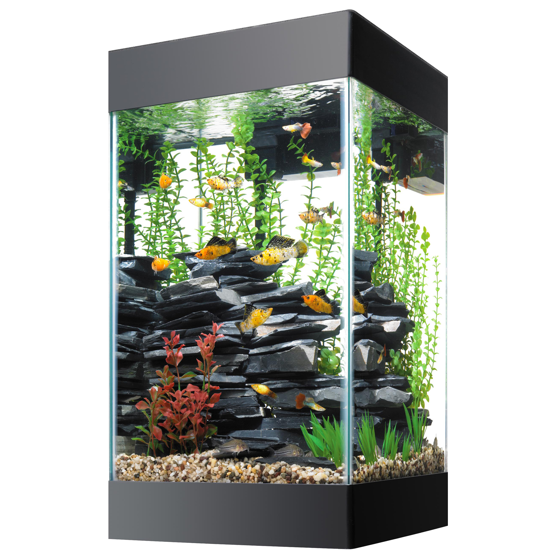 This beautiful 15 gallon aquarium comes with everything you need to ...