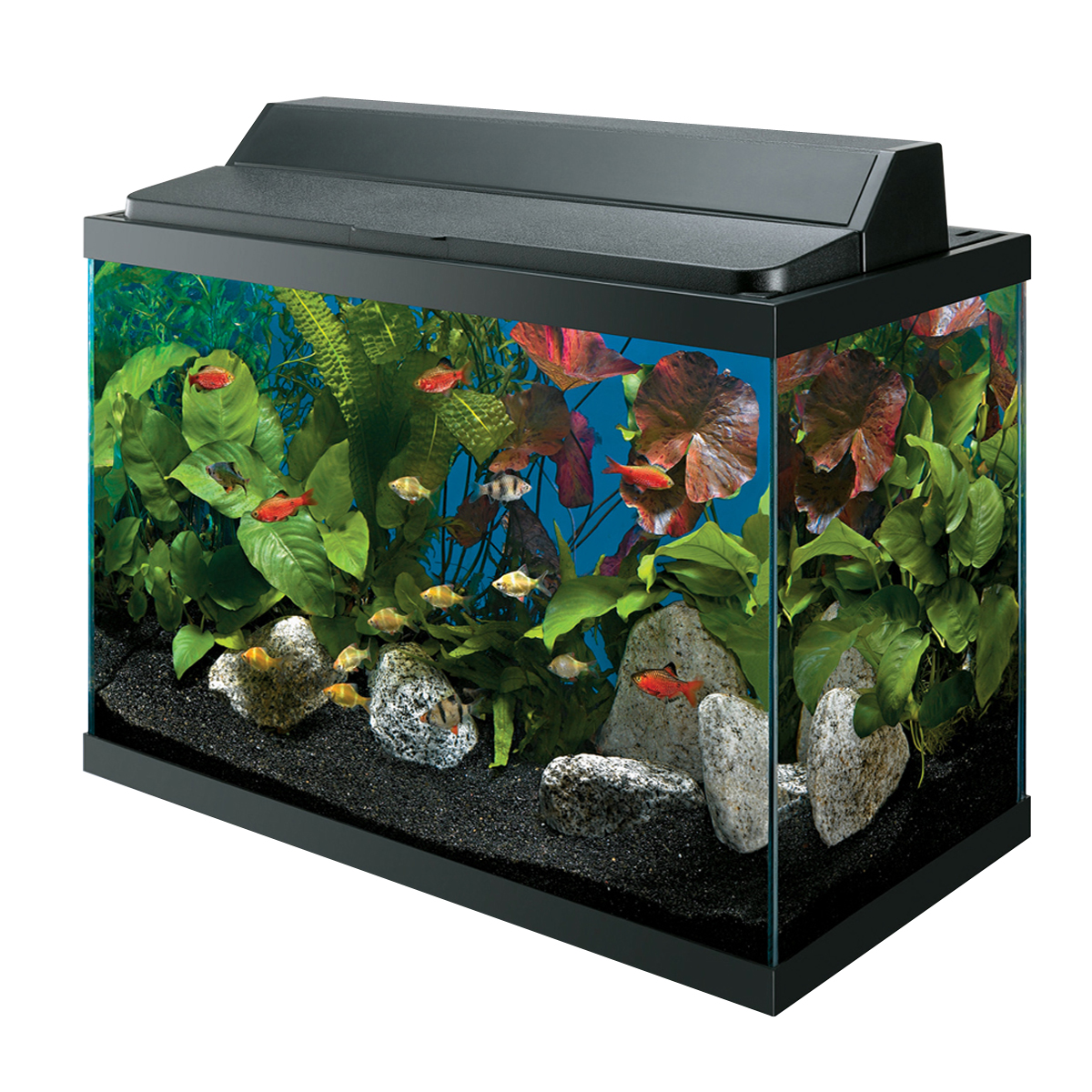 Fish specials wilmette pet center for Aqueon fish tank