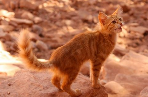 Cat in the desert