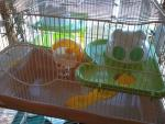 Cool new cages perfect for hamsters