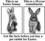 Easter and rabbits don't mix!