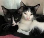Meet Sweet Kittens, James and Clark
