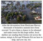 Hurricane Harvey Dogs are here!